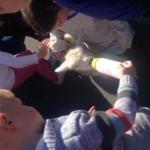 Spring Lamb Visit